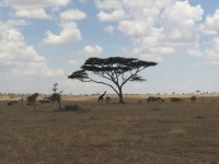 Serengeti Tranquility